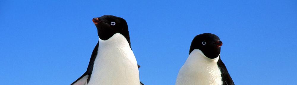 pinguino_linux